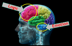 Logical vs. Emotional Decision-Making Part of the Brain